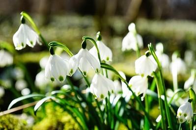 Pierwszy dzień wiosny - ZWYCZAJE